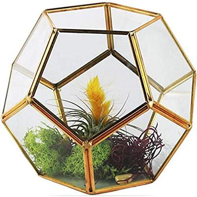 "Circleware Terraria Terrarium Clear-Glass Metal Frame Design Home Plant Decor Flower Balcony Display Box and Best Selling Garden Gifts, 7.09"" x 5.5"", Geometric-Gold-7.09x5.5"